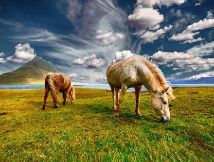 Voyage pour l'Islande